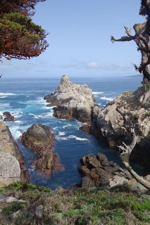 Point Lobos State Reserve Fantastic Walks With Breath Taking Scenery