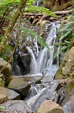 Dandenong, Avustralya: Beautiful waterfalls