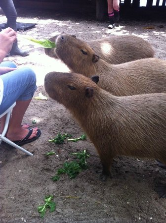 Palm Beach Zoo & Conservation Society : 3 sisters