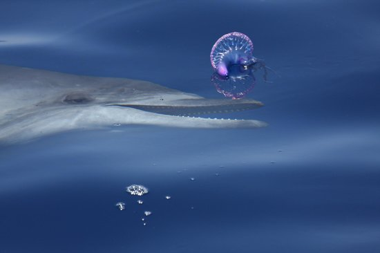 Fancy II Whale Watching: delfin con galera