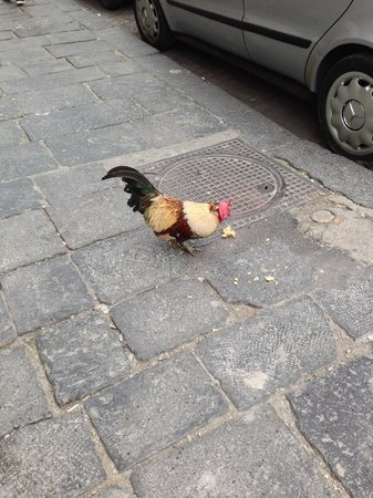 "Palazzo Caracciolo Napoli - MGallery Collection: A ""neighbor"" on the street near the hotel"