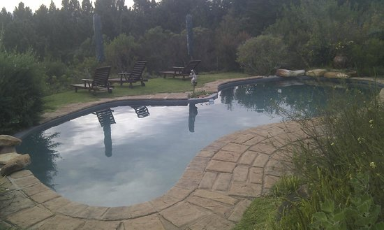 Fynbos Ridge Country House & Cottages : The pool set amongst the Fynbos
