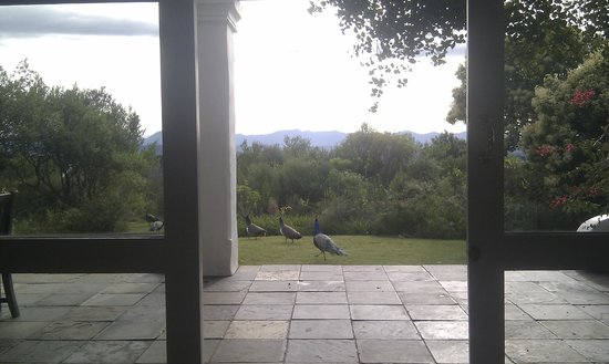 Fynbos Ridge Country House & Cottages : Peacocks from the breakfast room