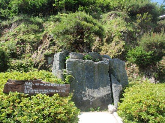 Cheongwon-gun South Korea  city photos : Cheongwon gun Pictures Featured Cheongwon gun Photos TripAdvisor