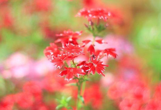 Saj Resort: Flower bed
