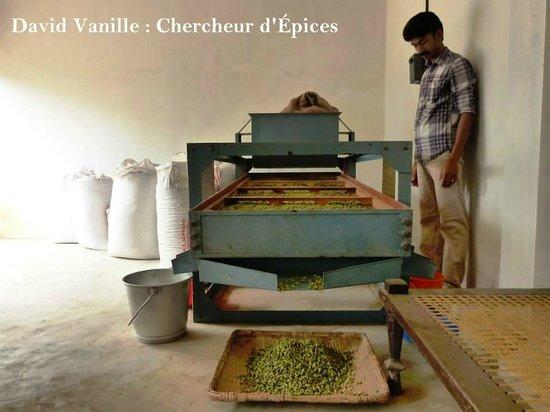 Cardamome du Kerala - David Vanille et Épices - Guadeloupe