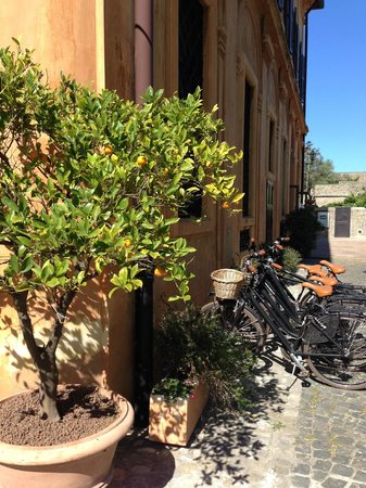 Orange tree and bikes for use by guests