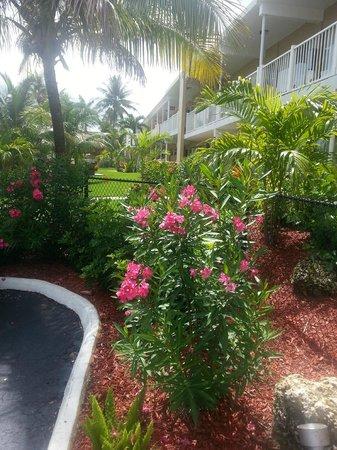 Budget Inn Ocean Resort: Lovely landscaping!