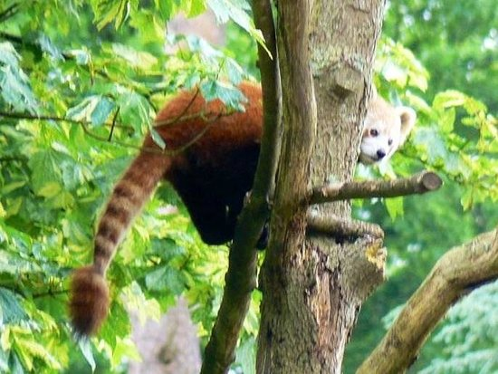 Cotswold Wildlife Park and Gardens: May 2014