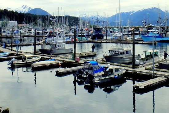 Gallant Adventures: the marina in Sitka