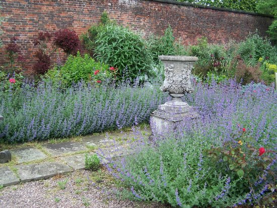 Arley Hall & Gardens: Drifts of Nepeta in the Walled Garden