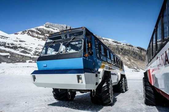 Columbia Ice Field: The busses