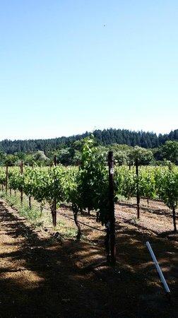 Wine Country Journeys LLC: Vineyards