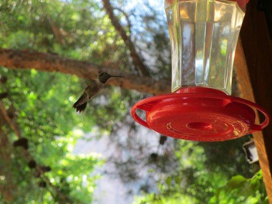Bit & Spur: Hummingbirds on Patio