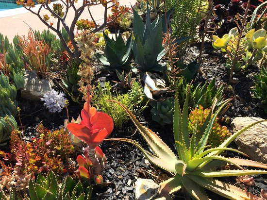 The Casitas of Arroyo Grande: Beautiful landscaping