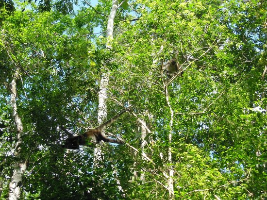 La Selva Mariposa: Punta Laguna Spider Monkey Reserve