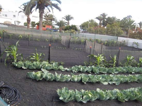 Hotel Floresta: Allotment where fruit and veg in restaurant grows!