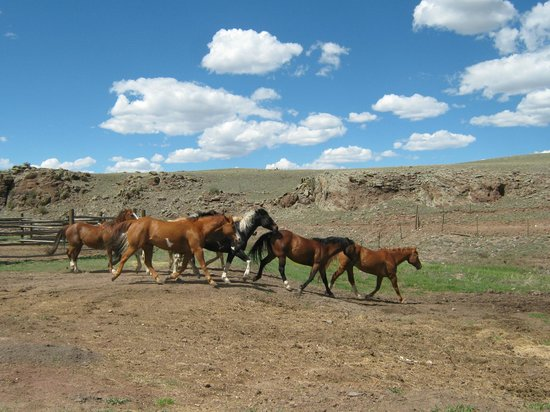 Badger Creek Ranch: Horses