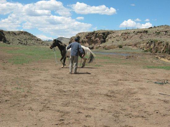 Badger Creek Ranch: Ground work