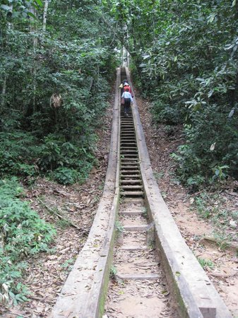 Posada Amazonas: Steps up from river to lodge