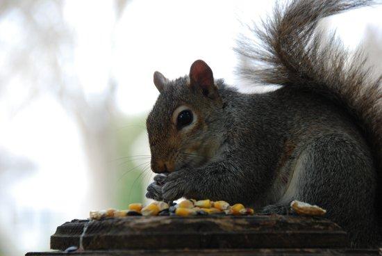 Inn at Horn Point : A friend enjoys breakfast near the outdoor dining deck