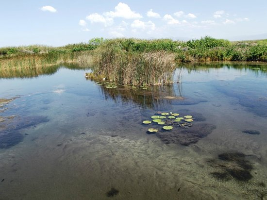 Cuatro Cienegas Reserve: Poza de las Tortugas Bisagras