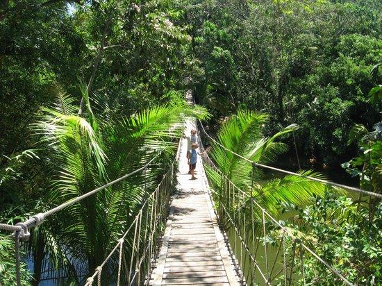 Gumbalimba Park : Footbridge