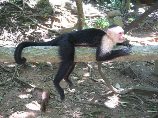 Gumbalimba Park : Monkey that you can have sit on your shoulder