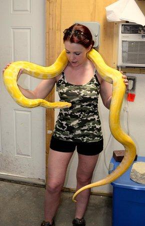 Gatorland: Python