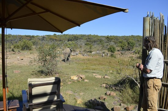 Makweti Safari Lodge : An elephant wandering though camp