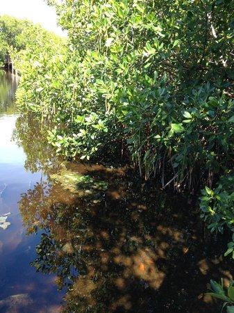 Las Cabezas de San Juan Nature Reserve: mangrove