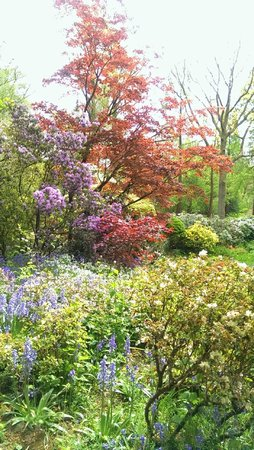 Winterbourne House and Garden: Spring colour