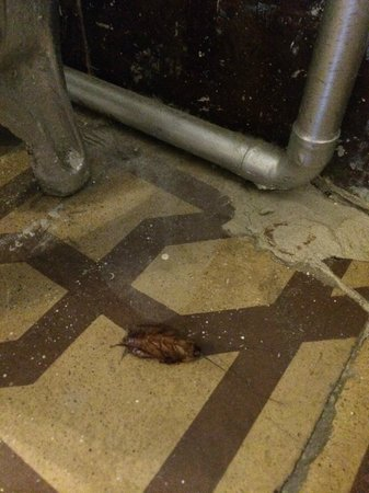 Simon Hotel: dead cockroach in room