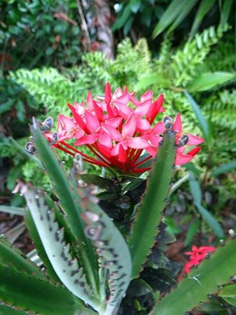 Pousada Horizonte Azul: amazing flora around the rooms