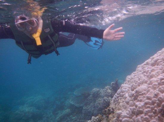 Arena Island Resort : Snorkel Galore!
