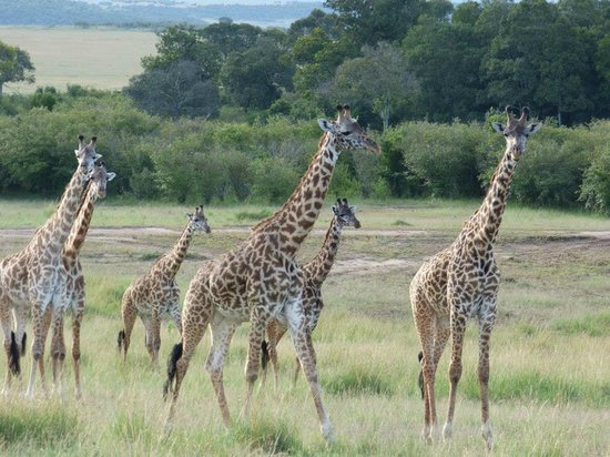 East Africa Adventure Tours and Safaris - Day Tours: Masai Mara