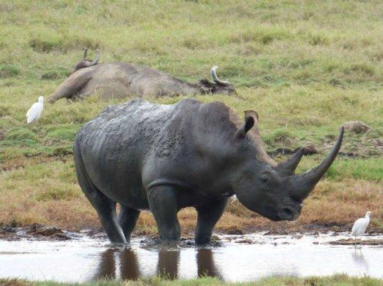 East Africa Adventure Tours and Safaris - Day Tours: Lake Nakuru