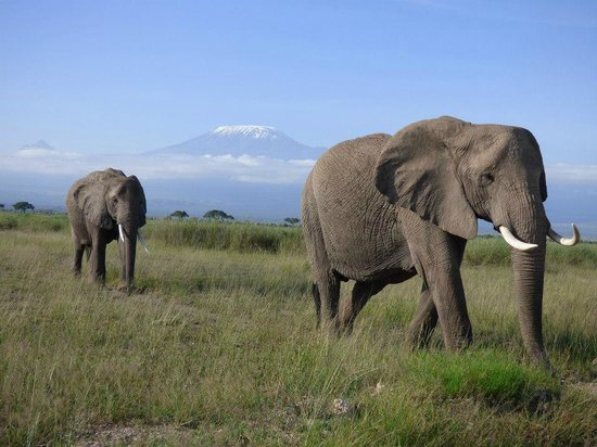 East Africa Adventure Tours and Safaris - Day Tours : Mt. Kilimanjaro