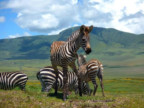 East Africa Adventure Tours and Safaris - Day Tours : Ngorongoro