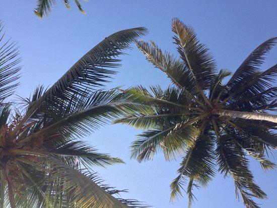 Hilton Salalah: Beautiful coconut palm trees