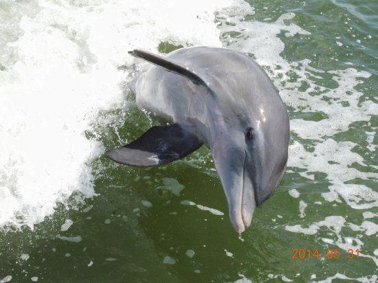 Estero Bay Express Dolphin & Sunset Boat Tours: Well hello there!