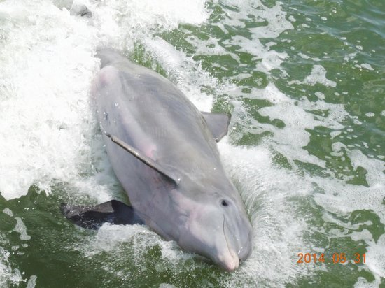 Estero Bay Express Dolphin & Sunset Boat Tours: say cheese!