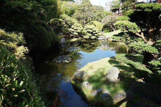 Japanese Tea Garden: Tea Garden