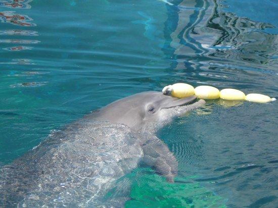 Clearwater Marine Aquarium : Nicholas Playing