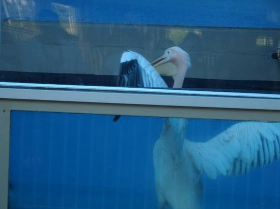 Clearwater Marine Aquarium: Lucy or Ricky...Played Rufus in movie
