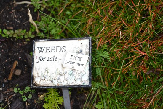 Sequim Bay Lodge: In the flowerbed