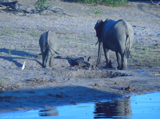 Cresta Mowana Safari Resort and Spa: elephants