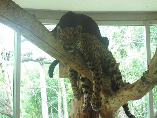 Tiergarten Schoenbrunn - Zoo Vienna : Leopard