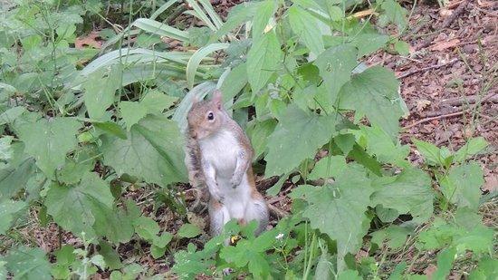 Parco del Valentino : lo scoiattolo