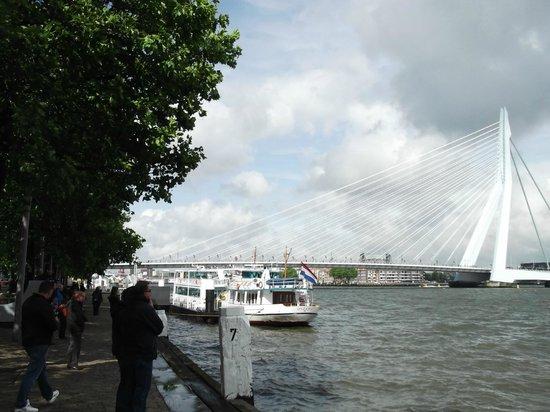 Erasmus Bridge: Erasmus Brücke